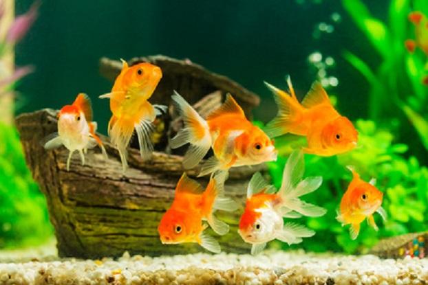 Aquarium-Vereine